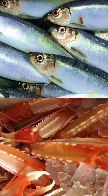 Herrings and prawns